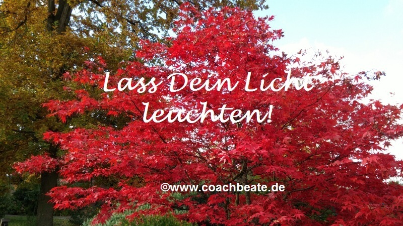 Herbstbaum - Coach Beate